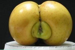 Le fruit de la renommée dans Poésie Le-Marginal-Magnifique-po%C3%A8me-Le-fruit-de-la-renomm%C3%A9e-sexe-fruit-en-forme-de-cul-de-fesses-Brad-Pitt-Victor-hugo-ma%C3%AEtresse-Juliette-Drouet-importance-de-la-renomm%C3%A9e-pour-niquer-300x203